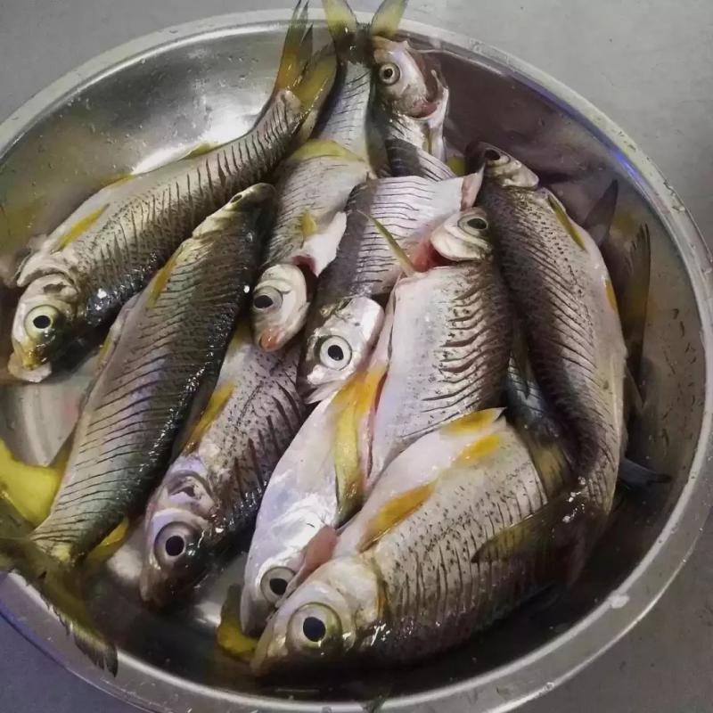 千岛湖鲜美味 | 资深本地垂钓爱好者告诉你!