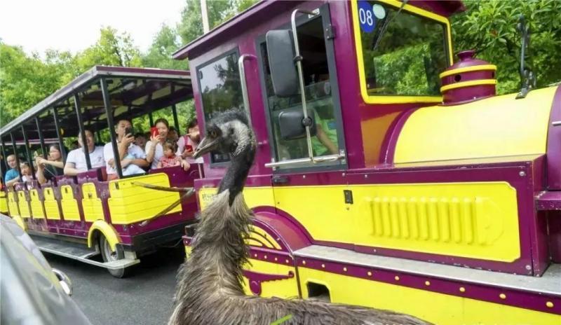 杭州野生动物园游园攻略(地址+门票+注意事项等)