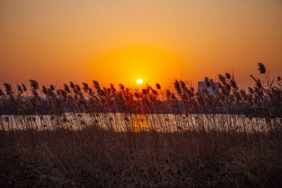 秋末冬初,杭州这些地方的芦苇景观美哭了!