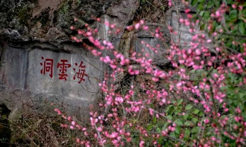 2020年第十二届杭州超山梅花节开幕啦(附最佳赏梅时间指南)!