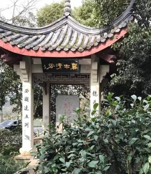 一起去杭州西湖龙井村,来一次龙井问茶,看十八棵御茶树