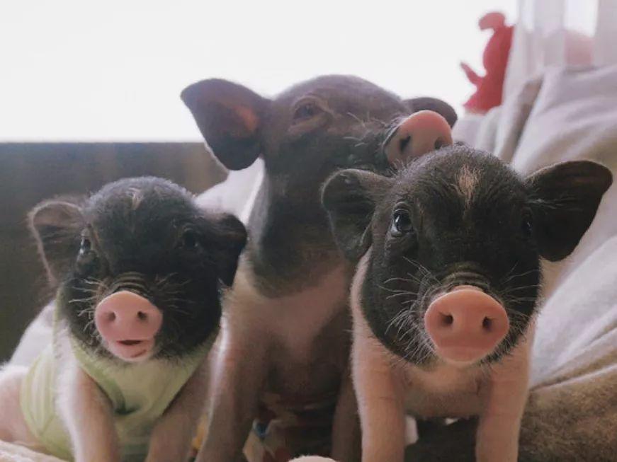 撸狗、撸猪、撸猫、撸鸭...万物皆可开撸!