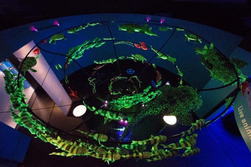 今年寒假带孩子来看《神秘海洋》主题展吧!(展会时间+地点+票价)图2
