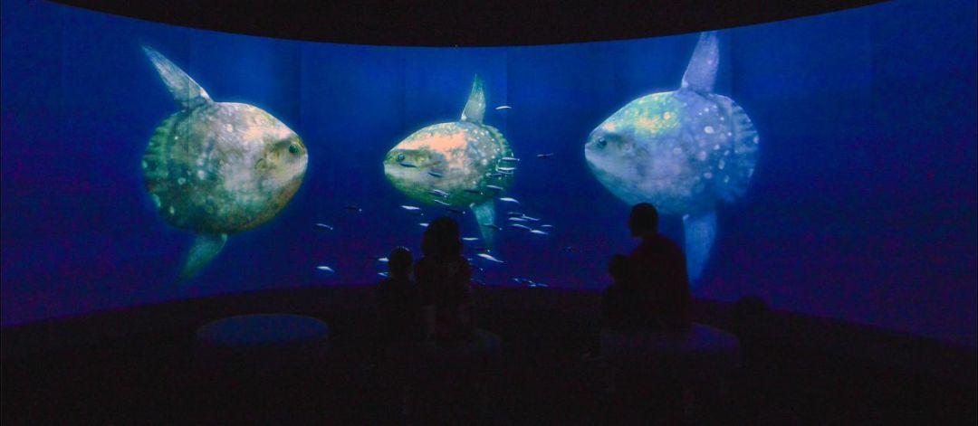今年寒假带孩子来看《神秘海洋》主题展吧!(展会时间+地点+票价)图3
