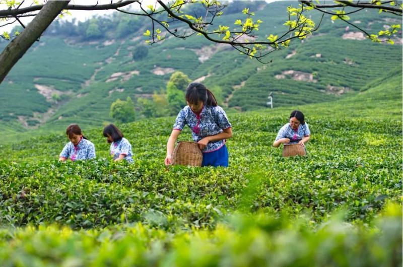 杭州美味年货地图,帮你回忆最传统的年味儿!