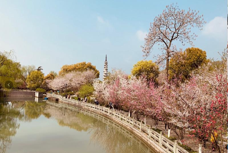 杭州这些绝美花海,再不去看就晚了!