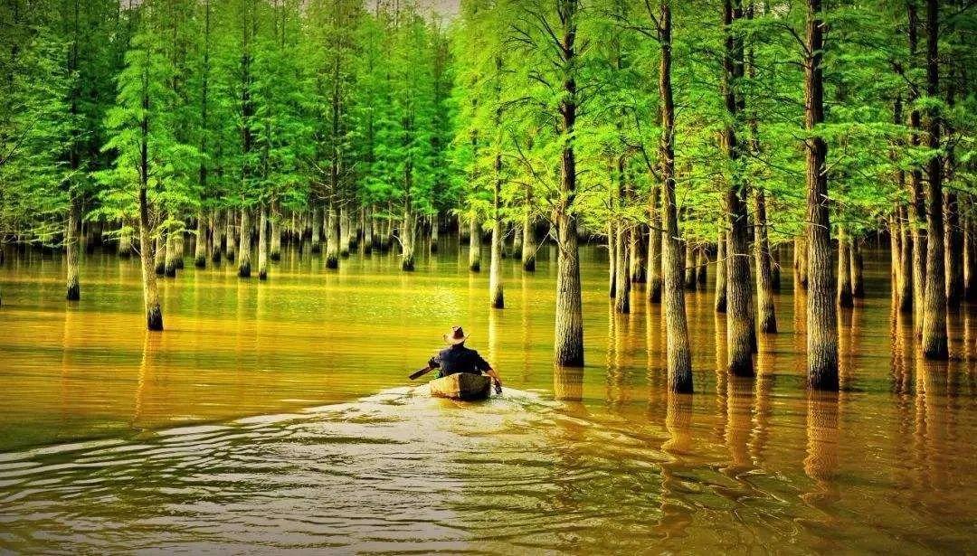 一起去青山湖国家森林公园吧!水、陆、空360°拥抱大自然!