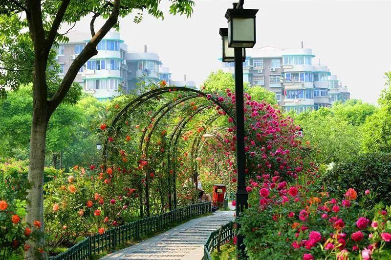 杭州五一去哪儿玩?大关公园拍月季吧!
