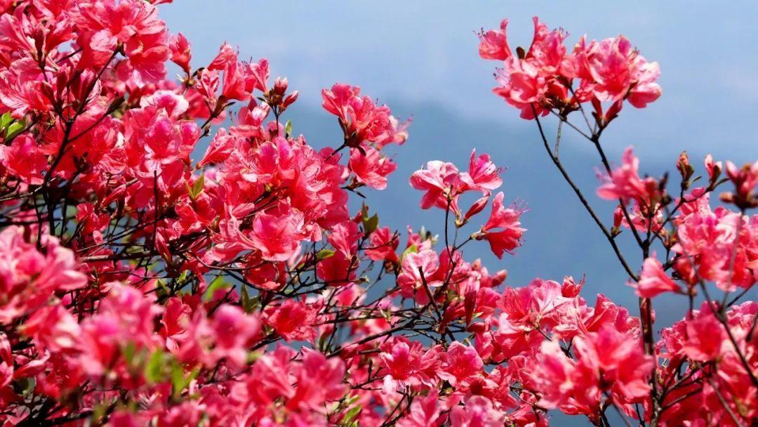 杭州这些花海惊艳亮相,你去看过了吗?