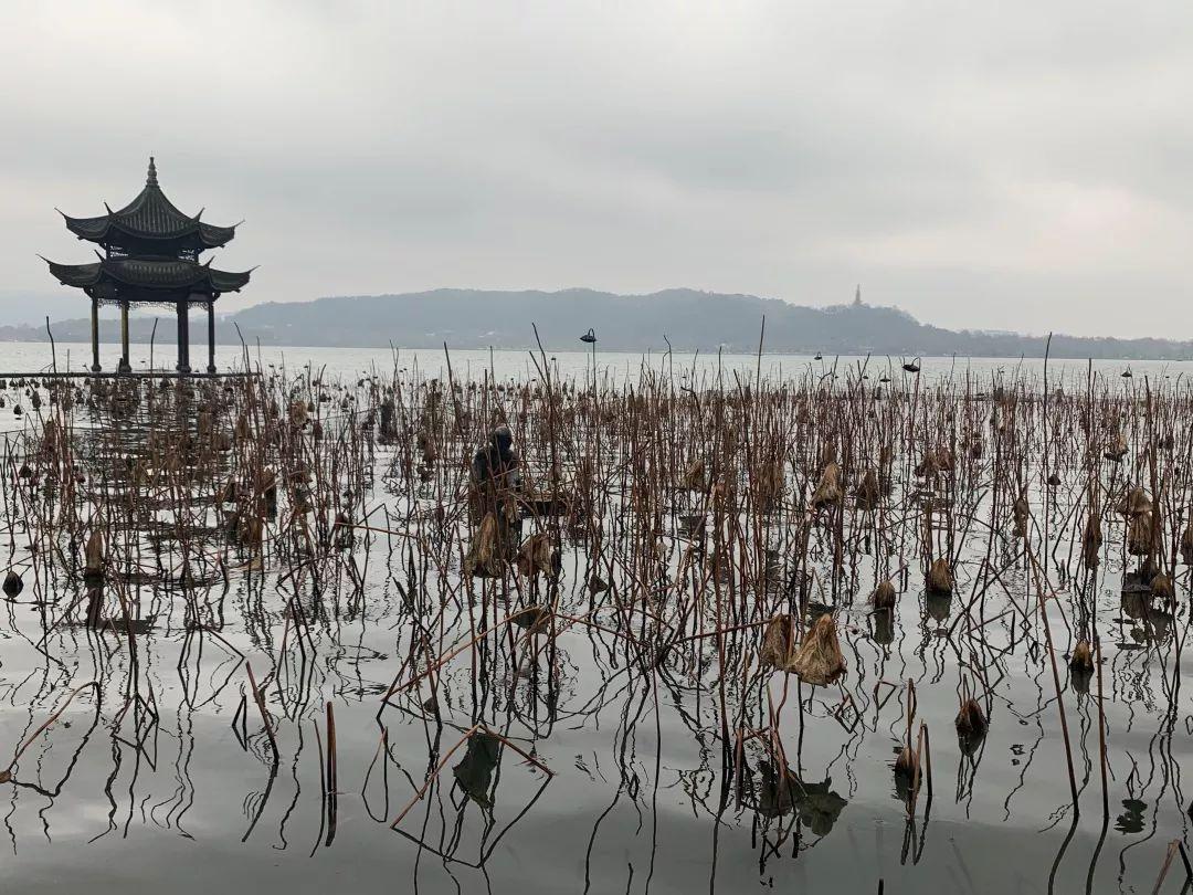 今年杭州西湖第一朵荷花什么时候开?