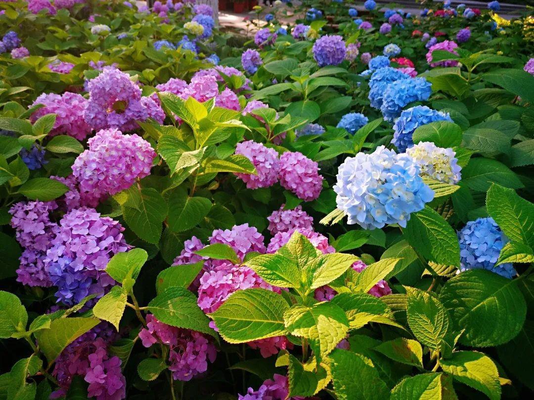 西湖景区5月有哪些景色可赏,最近已经美成一个大花园!