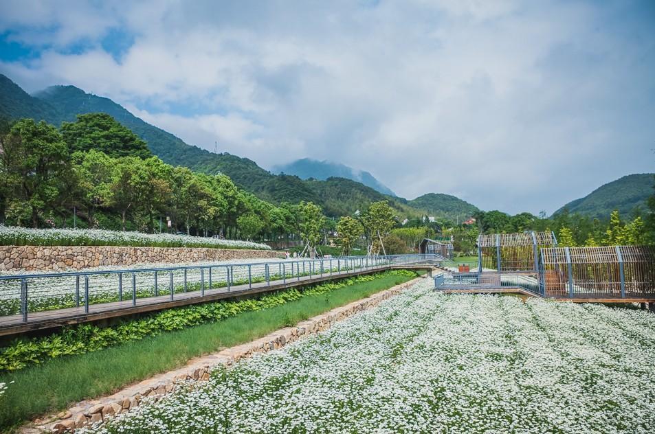 杭州周边这片4000㎡小雏菊花海绽放了,不要门票免费观赏!