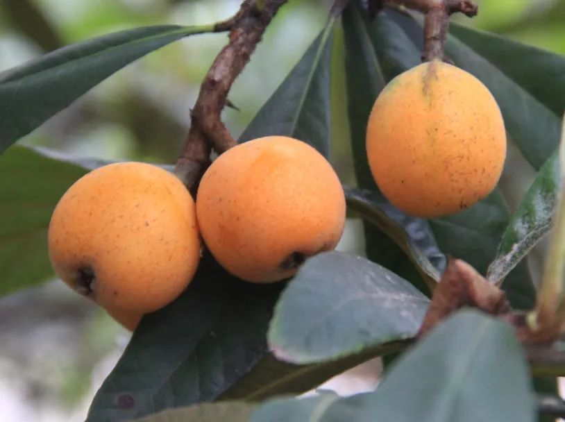 杭州夏天最时鲜的水果采摘地图来了!