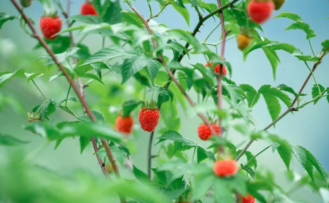 杭州夏天最时鲜的水果采摘地图来了!图3