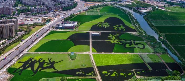 2020年全国农业产业强镇建设名单公布!浙江8地入选!