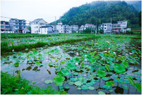 杭州除了西湖,还有哪些赏荷圣地?