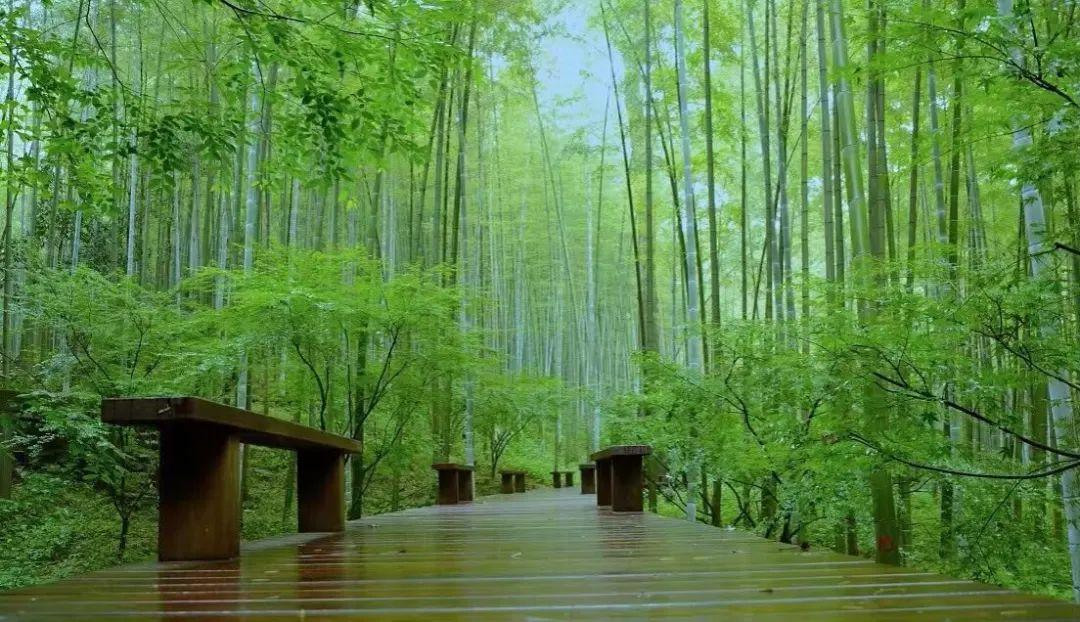 杭州竟藏着这么多夏日漫步好去处,你家附近有吗?图2