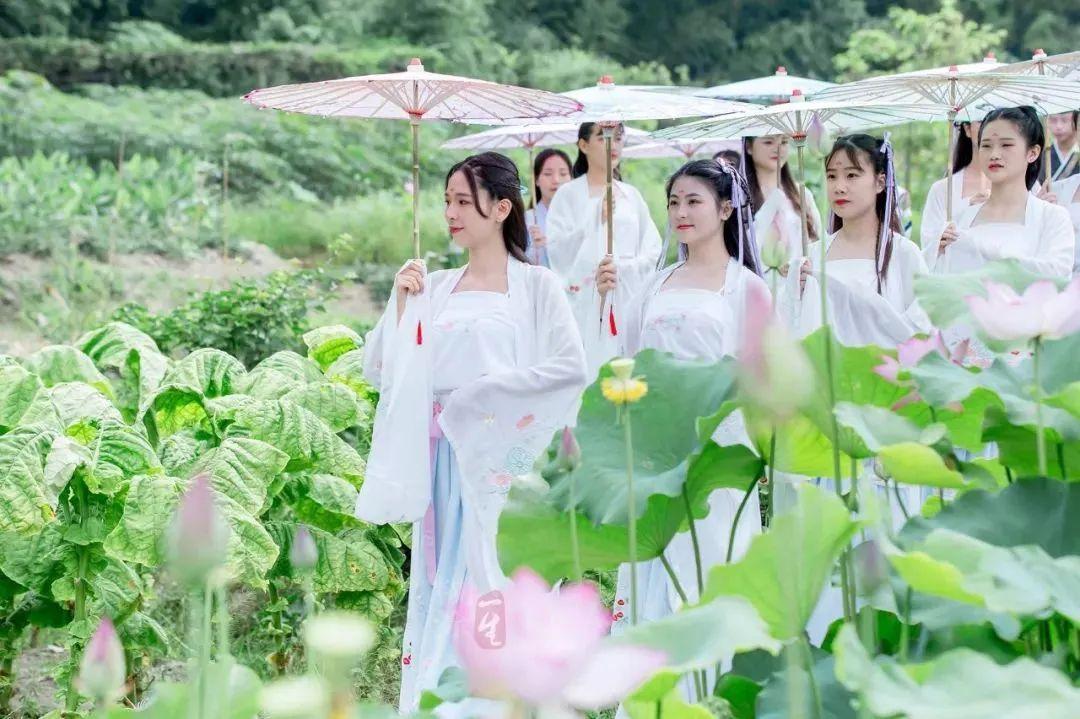 2020年首届浦江花桥荷花旅游节邀您赏荷啦!