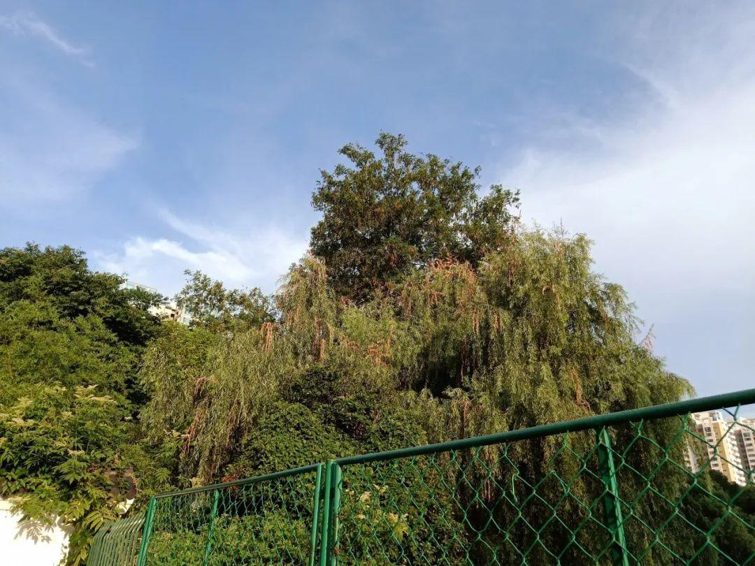 高温天这种虫害高发,号称植物的天敌!你能来帮忙除害吗?