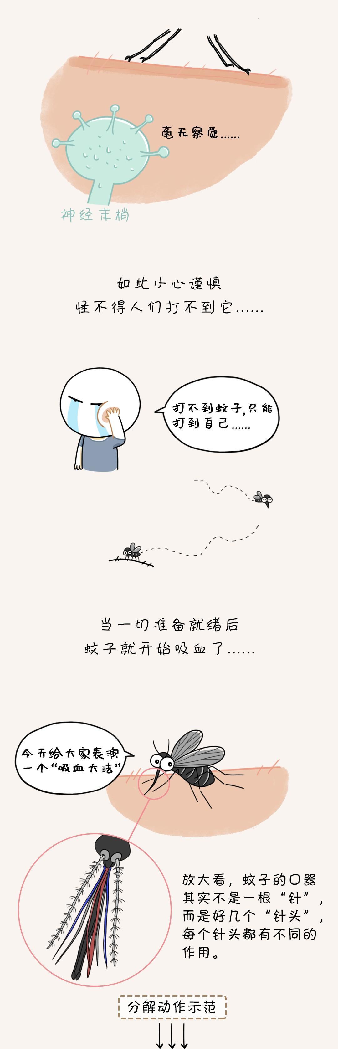 今天是个大日子:世界蚊子日!