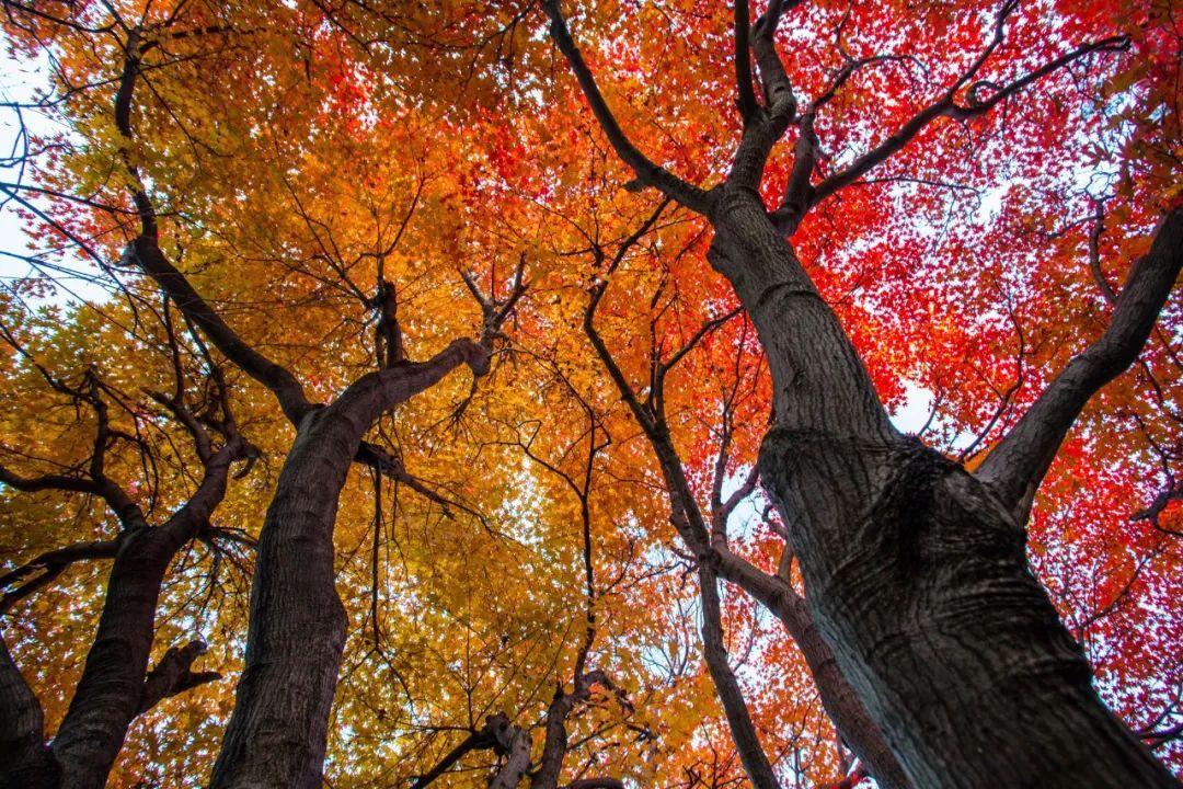 杭州周边秋天最美的10个地方,你去过几个?