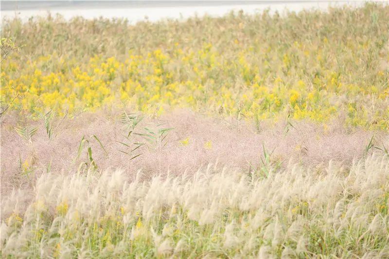 今年一大波最新秋季限定风景登场,拍照打卡太美了!