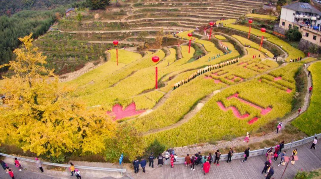 杭州的银杏黄啦!这份最新银杏打卡地图来了!