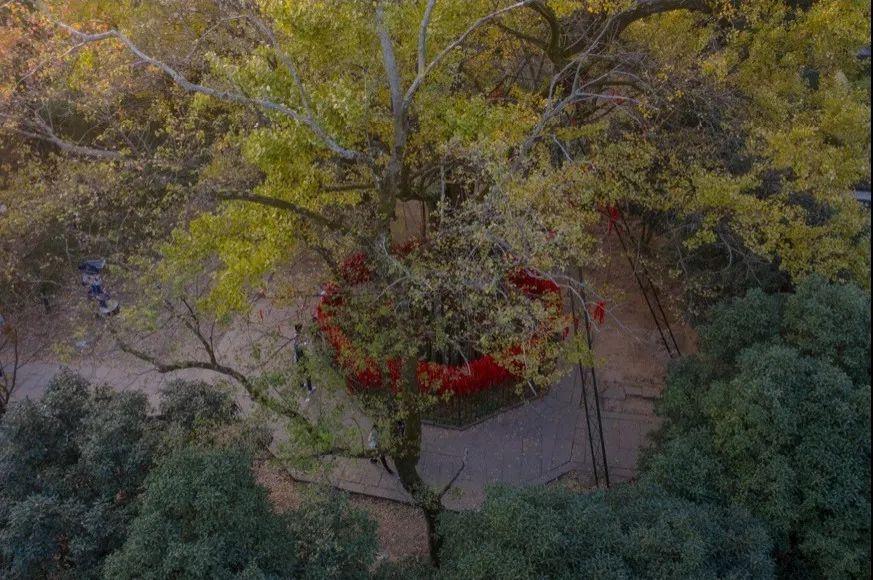 杭州每年必打卡的银杏地图,你知道几个?