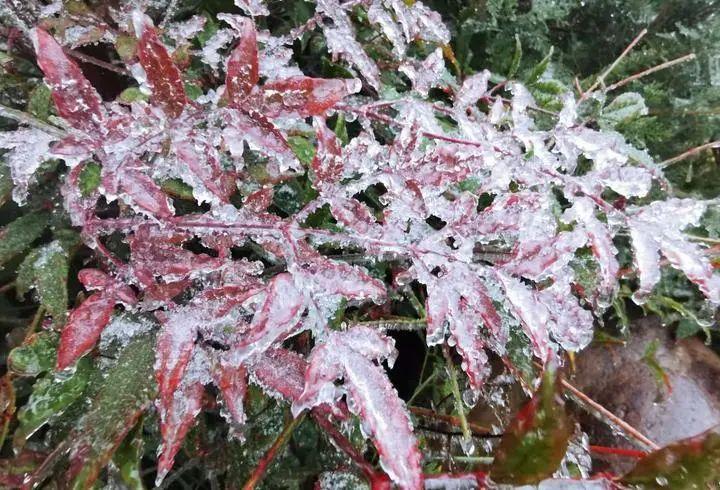 杭州今天正式入冬,大风、降温…深入骨髓的冷来了~图3