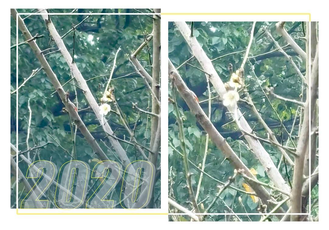 杭州超山的第一朵梅花开了,办理杭州文化旅游卡可以免费玩哦~