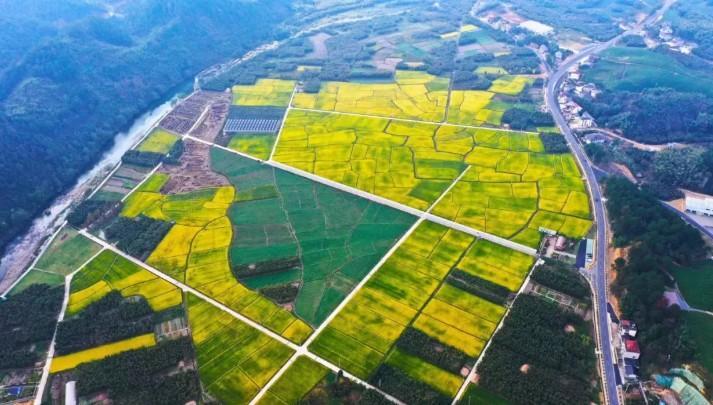 """杭州市""""十大最美农村路""""出炉,还有千亩花海可赏!"""