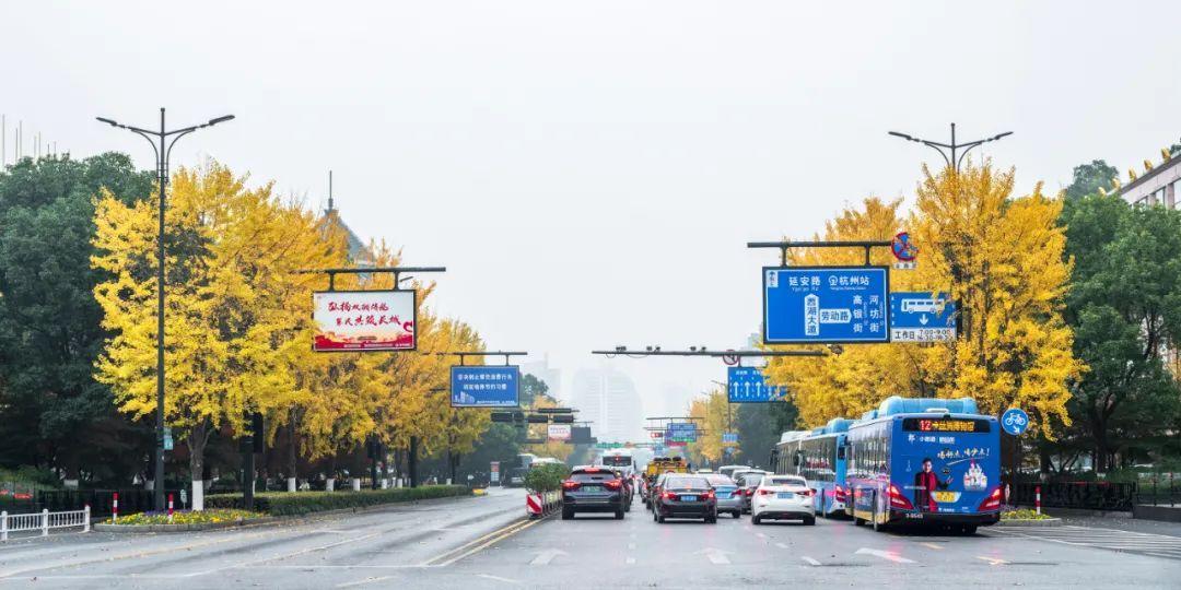 杭州13条道路美到上了省级榜单!有没有你家附近?