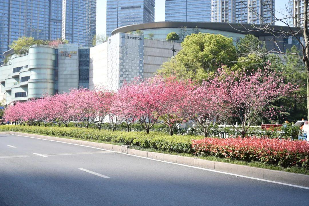 杭州13条道路美到上了省级榜单!有没有你家附近?图3