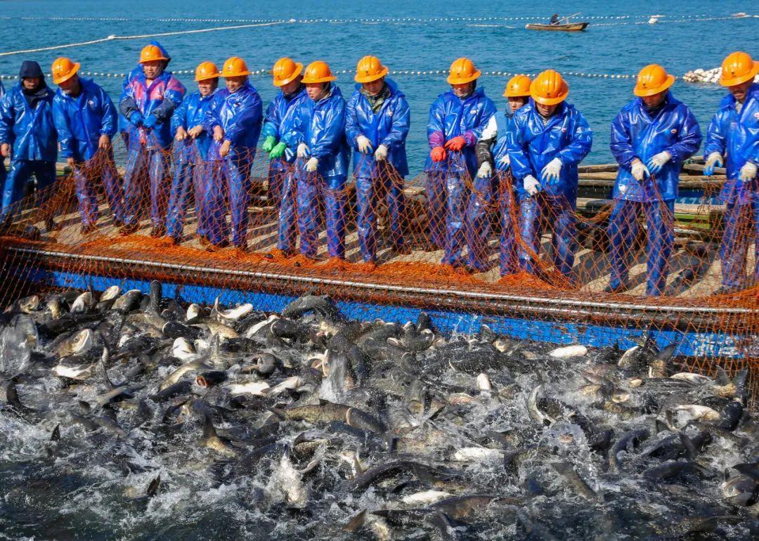 震撼!30000公斤!千岛湖新年第一网!