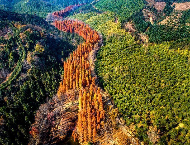 """一起""""森""""呼吸!杭州这些国家级公园,你去过几处?"""