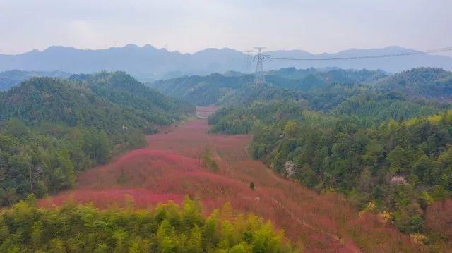 杭州第一波樱花盛放!惊艳视频美图放送,早春赏樱路线快收藏!