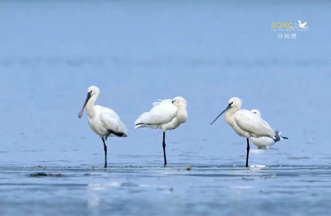 春暖花开,西湖边上的这些鸟儿们集体出游了!