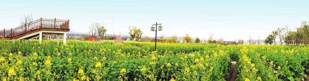 """杭州的""""七彩花海""""来啦!收好这份春游地图,安排起来!"""