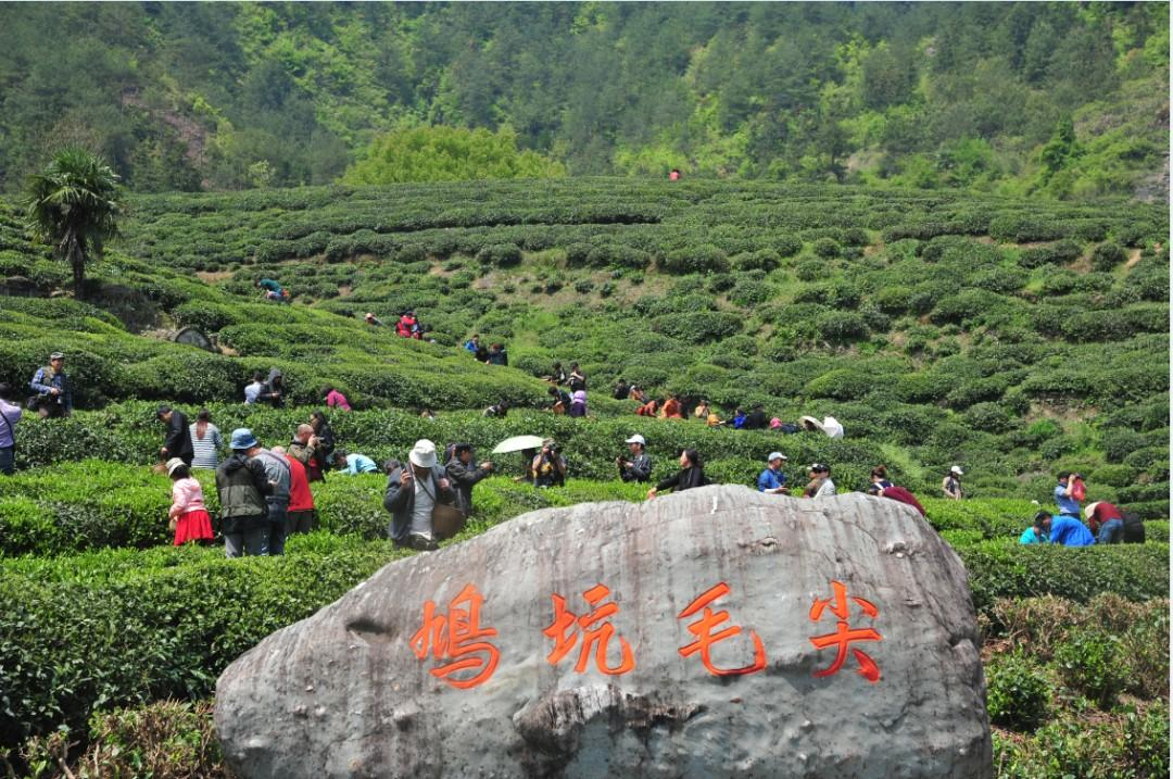 入春的杭州,茶园里满眼绿色,杭州这些茶园的茶叶和美景美的让人陶醉!