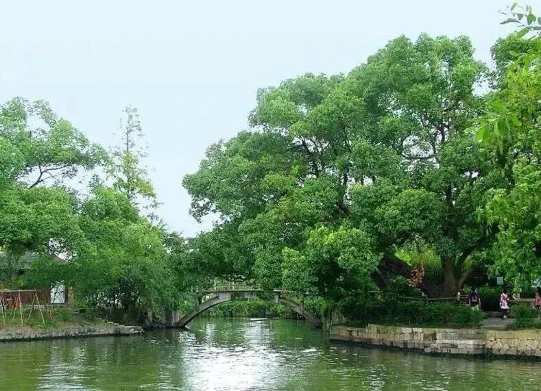 马上就要植树节了,你知道杭州这些叹为观止活化石吗?