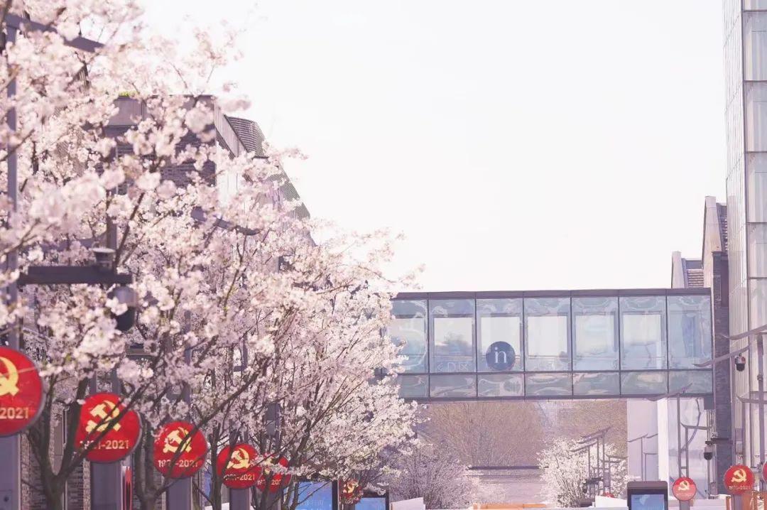 杭州13条春日私藏徒步赏花路线,去感受一路繁花似锦的限定美景吧!图1