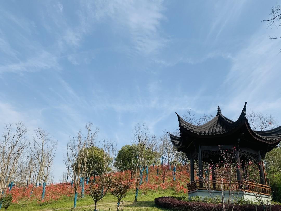 杭州13条春日私藏徒步赏花路线,去感受一路繁花似锦的限定美景吧!图3