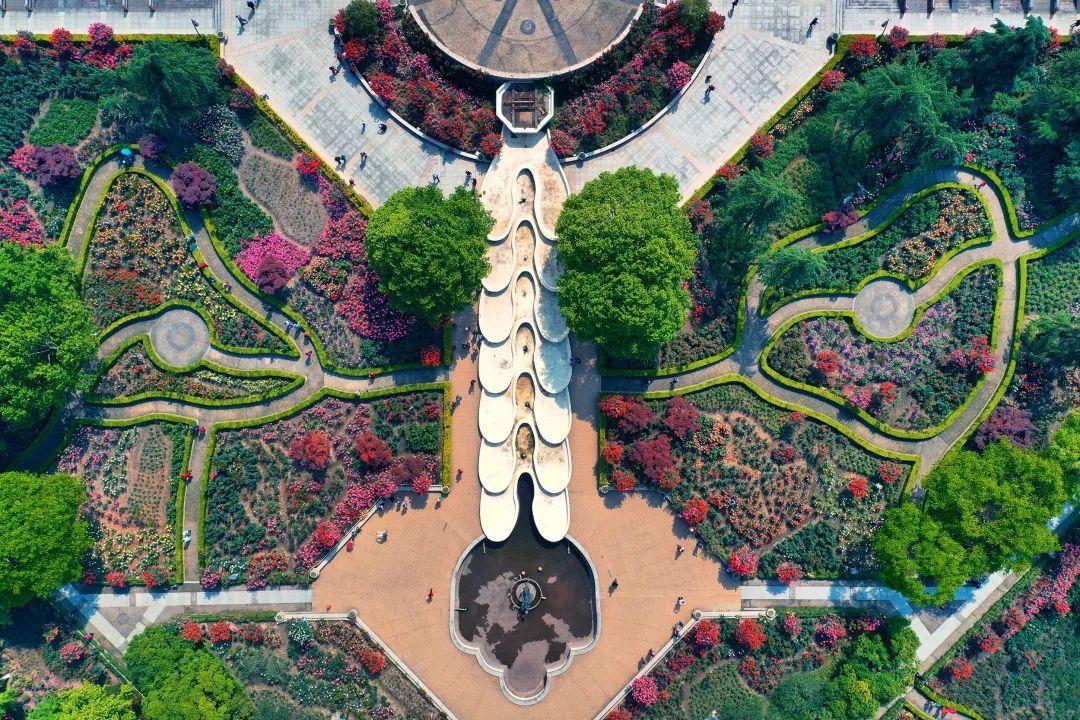 杭州全城的月季已经进入盛花期,哪些地方可以看到?